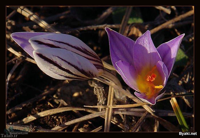 گلهای زیبا و عاشقانه متفاوت