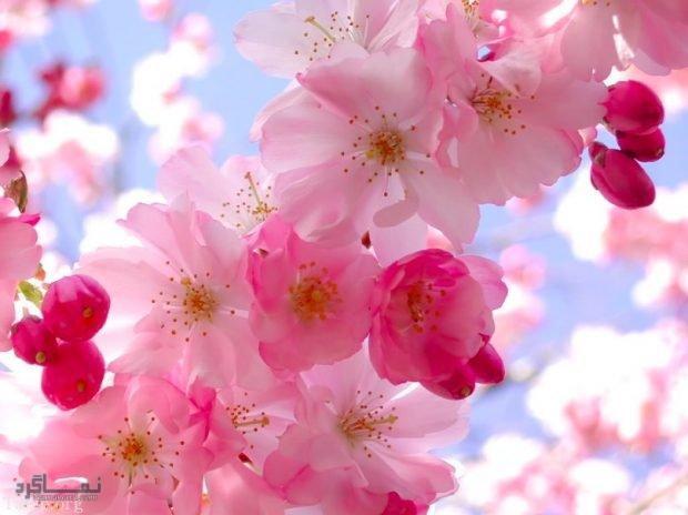 عکس گلهای خاص جذاب
