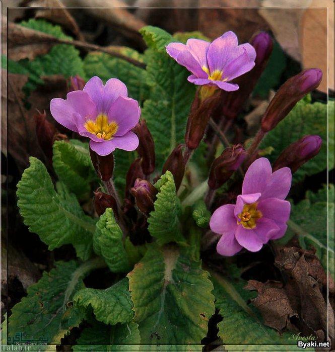 گلهای زیبا و عاشقانه جذاب