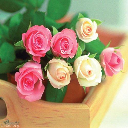 گلهای شیک جذاب
