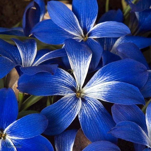 عکس گلهای جدید خاص