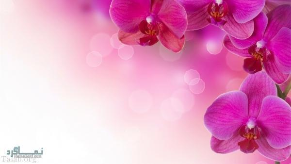 عکس گلهای شیک خاص