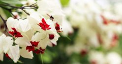عکس گل شیک و زیبا + جدیدترین عکس گل برای پروفایل (۷)