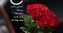 عکس گل زیبا عاشقانه + جدیدترین عکس گل برای پروفایل (۲)