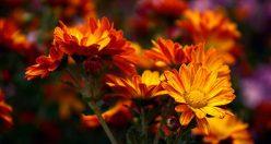 دانلود عکس گل زیبا + جدیدترین عکس گل برای پروفایل ۱۳۹۹