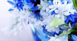عکس گل شیک پروفایل + جدیدترین عکس گل برای پروفایل (۸)