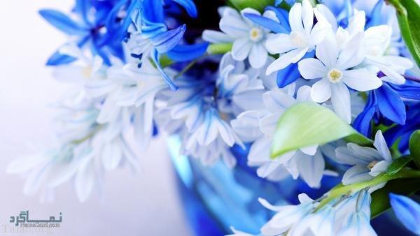 عکس گل شیک پروفایل