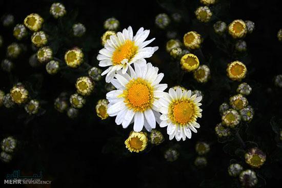 دانلود عکس گل زیبا