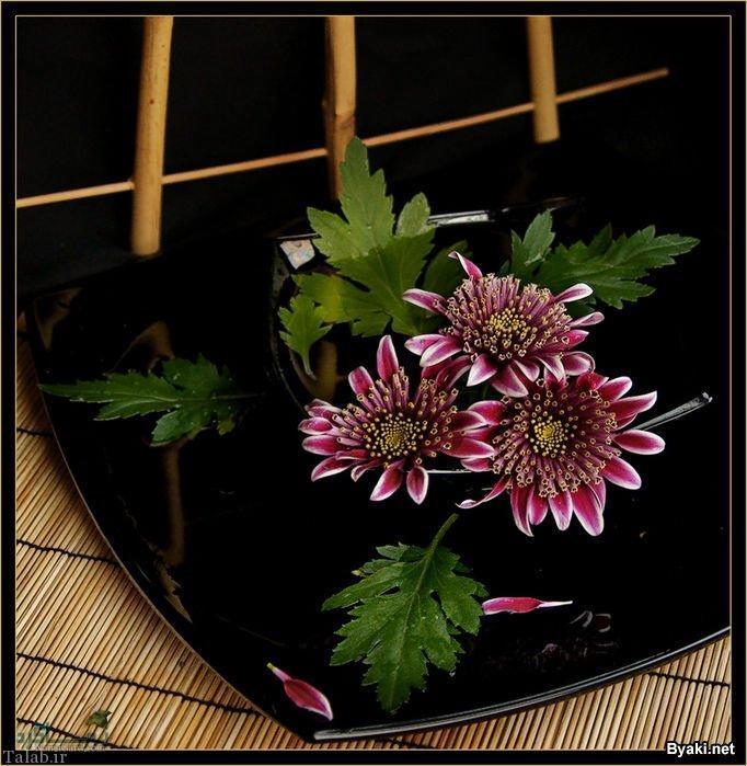 عکس گل زیبا و عاشقانه