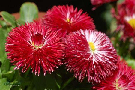 عکس گل زیبای شیک