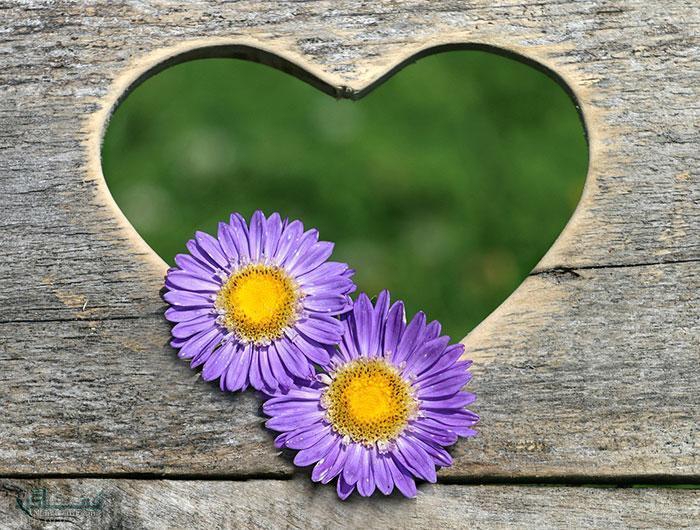 عکس گل نرگس جذاب
