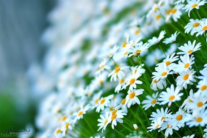 عکس گلهای زیبای جدید