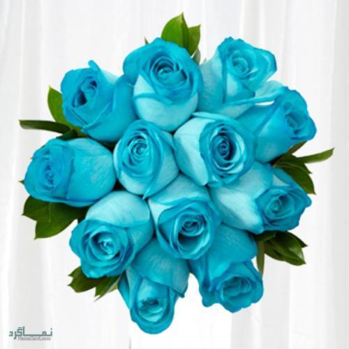 عکس گلهای رز جدید