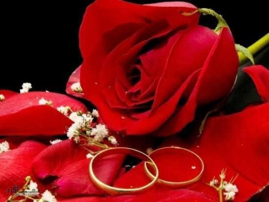 عکس گلهای رز شیک