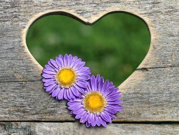 عکس گل عاشقانه جدید