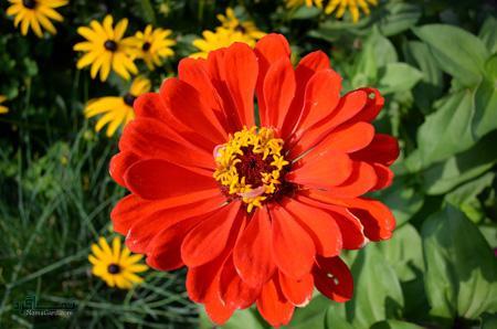 عکس گل زیبای متفاوت