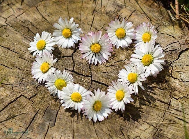 عکس های گلهای شیک