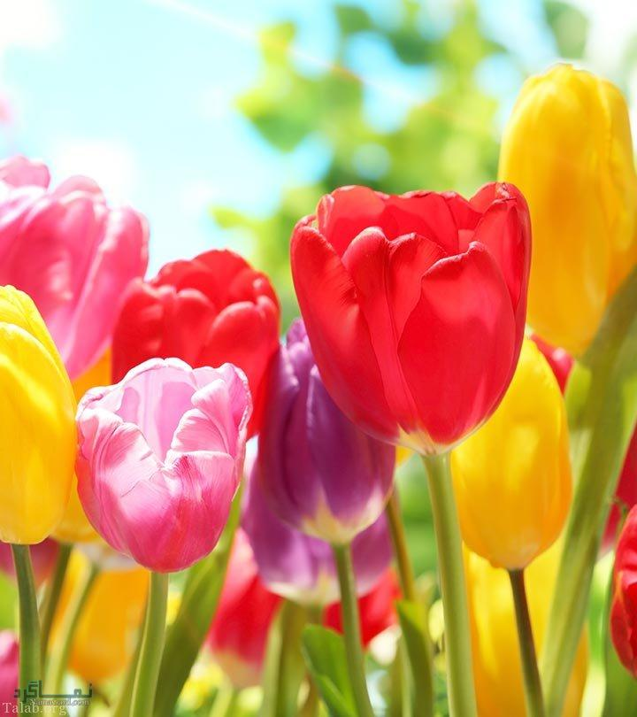 عکس گل عاشقانه شیک