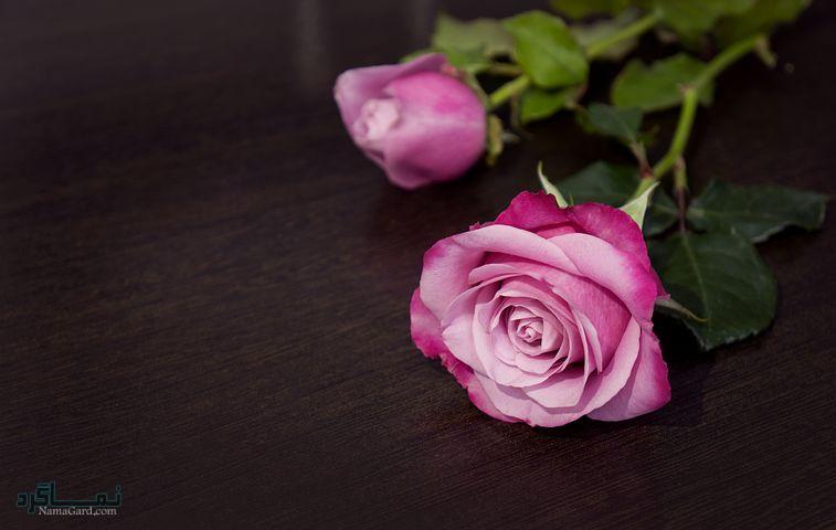 عکس گل زیبای جدید