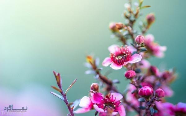 عکس گل عاشقانه متفاوت
