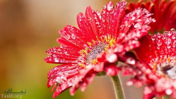 عکس گلهای زیبای خاص