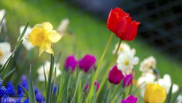 عکس گل عاشقانه زیبا