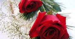 عکس پروفایل گل رز قرمز + زیباترین عکس های گل جدید (۴)