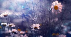 عکس پروفایل گل های زیبا + زیباترین عکس های گل جدید (۱۰)