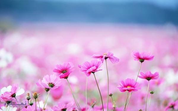 عکس پروفایل گلهای زیبا