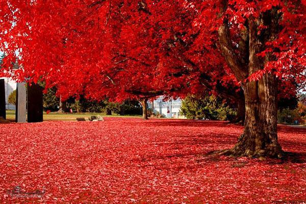 عکس های پروفایل طبیعت زیبا