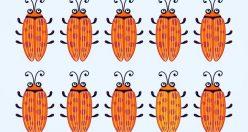 ۱۵ تست هوش بینایی سوسک های رنگارنگ (۱۲) + جواب