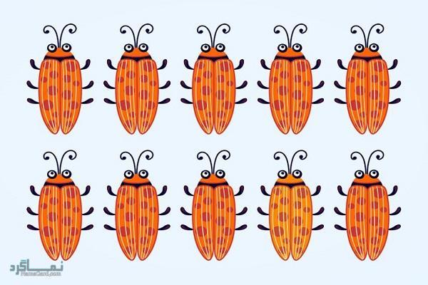 15 تست هوش بینایی سوسک های رنگارنگ (12) - تست 1