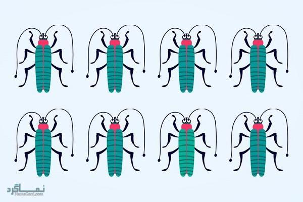 15 تست هوش بینایی سوسک های رنگارنگ (12) - تست 10