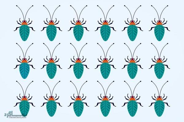 15 تست هوش بینایی سوسک های رنگارنگ (12) - تست 14