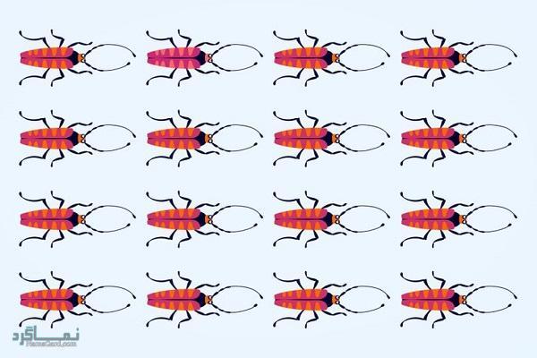 15 تست هوش بینایی سوسک های رنگارنگ (12) - تست 15