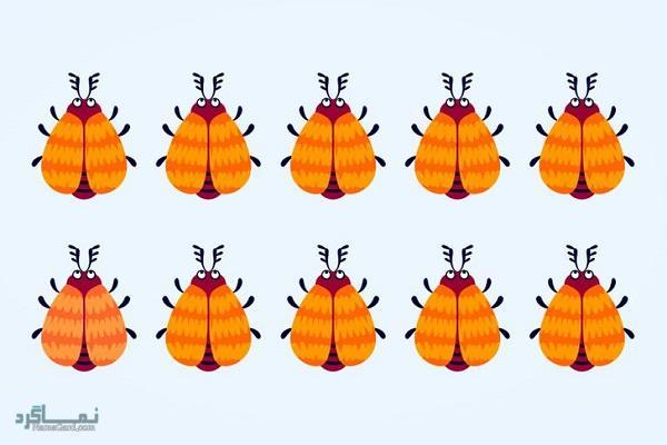 15 تست هوش بینایی سوسک های رنگارنگ (12) - تست 3