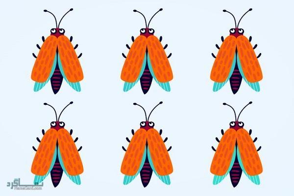 15 تست هوش بینایی سوسک های رنگارنگ (12) - تست 4