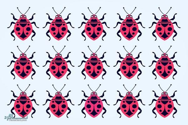 15 تست هوش بینایی سوسک های رنگارنگ (12) - تست 5