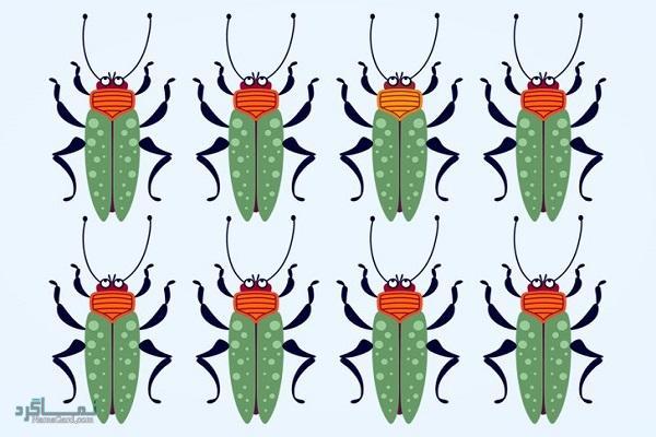 15 تست هوش بینایی سوسک های رنگارنگ (12) - تست 6
