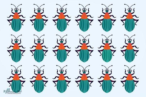 15 تست هوش بینایی سوسک های رنگارنگ (12) - تست 7