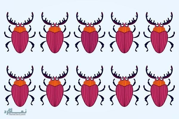15 تست هوش بینایی سوسک های رنگارنگ (12) - تست 8