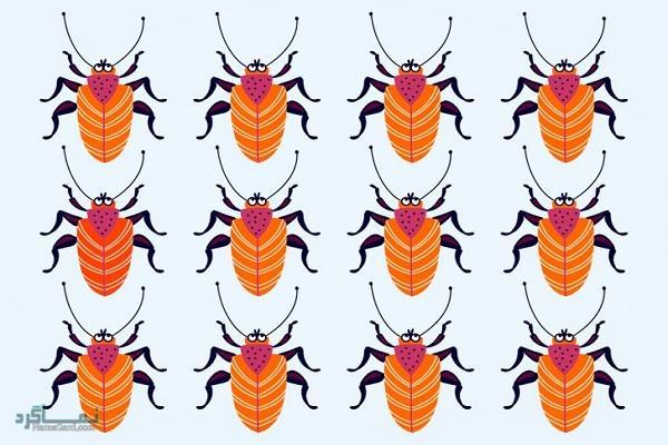 15 تست هوش بینایی سوسک های رنگارنگ (12) - تست 9