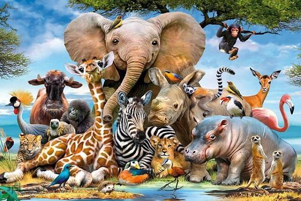 4 معمای تکان دهنده حیوانات + با جواب