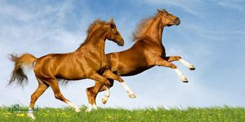 معمای قیمت اسب ها برای تیزهوش ها + جواب