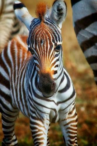 بک گراند های حیوانات جدید