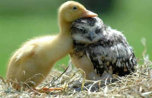 دانلود بک گراند های حیوانات قشنگ