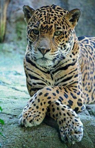 بک گراندهای حیوانات زیبا