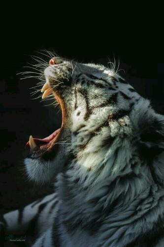 عکس های بک گراند حیوانات جذاب