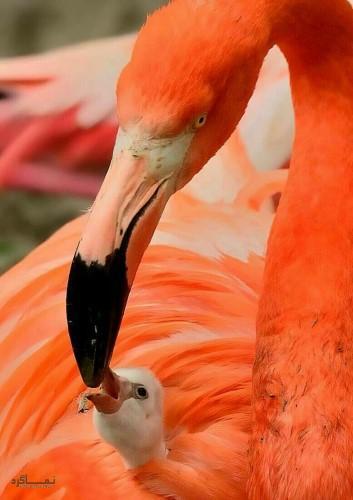 تصاویر های بک گراند حیوانات شیک