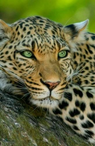 عکس های بک گراند حیوانات شیک